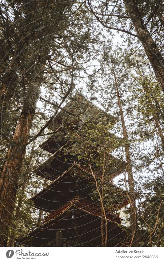 High Asian pagoda in woods Building asian Nature Green Vantage point Beautiful Natural East Tower Tradition oriental eastern Pagoda Seasons Fresh Environment