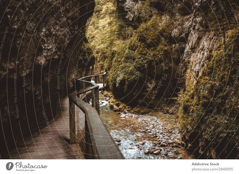 Wooden walkway in gorge Canyon Corridor Nature Green Vantage point Handrail Mountain Hill Cliff Rock Plant Beautiful Natural Seasons Fresh Environment