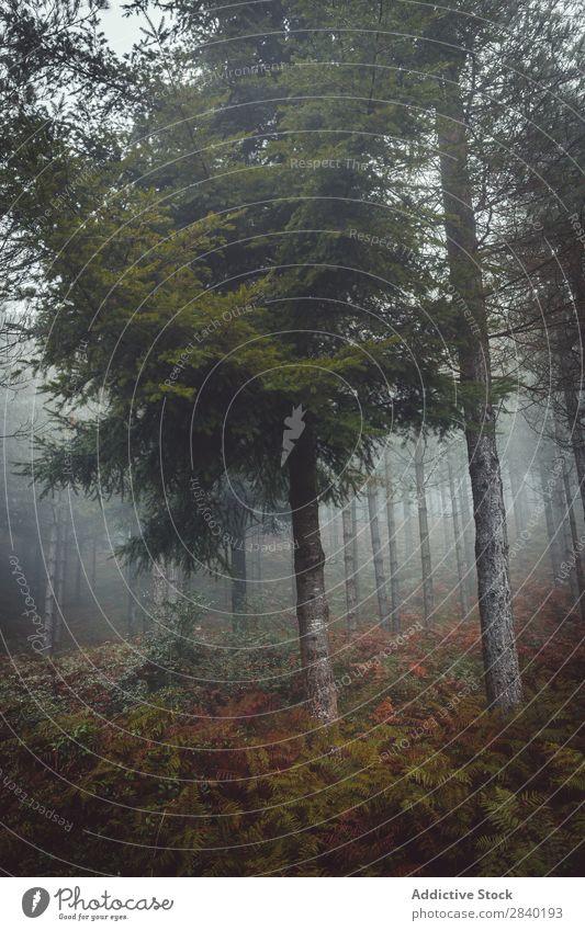 Road in misty forest Street Forest Fog Weather darkness Mystery Nature Autumn Landscape Magic Seasons Exterior shot Traveling roadway Dark Haze Lanes & trails