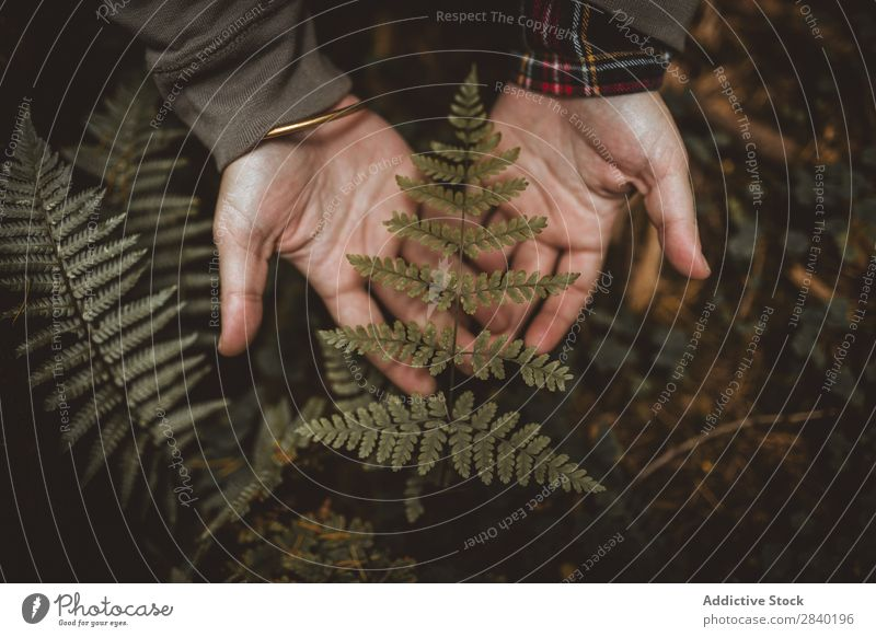 Person holding fern leaf Fern Leaf Human being Plant Green Nature Organic Seasons