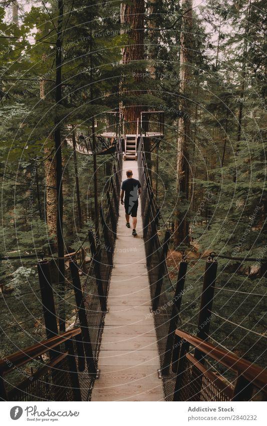 Man walking on bridge on trees Bridge Hanging Tree Adventure Construction above ground Park Suspension Green Sports Hiking Nature Forest Vacation & Travel