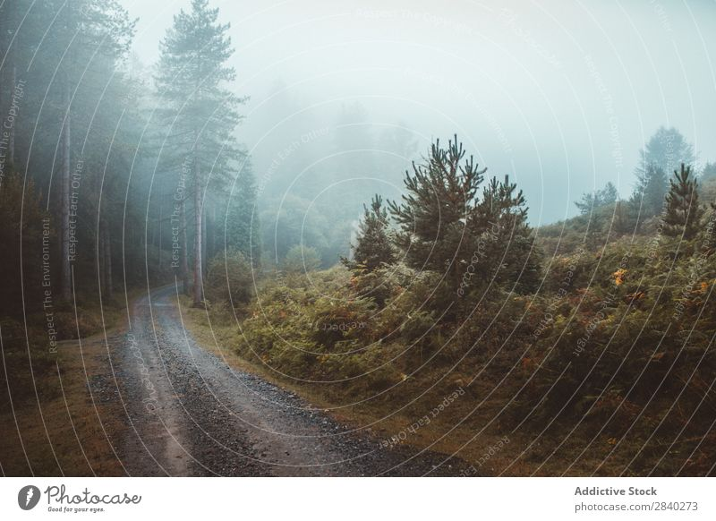 Misty path in forest Forest Fog pathway Mystery Nature roadway silence mood Autumn Landscape Weather Magic Seasons Exterior shot Traveling Dark Haze