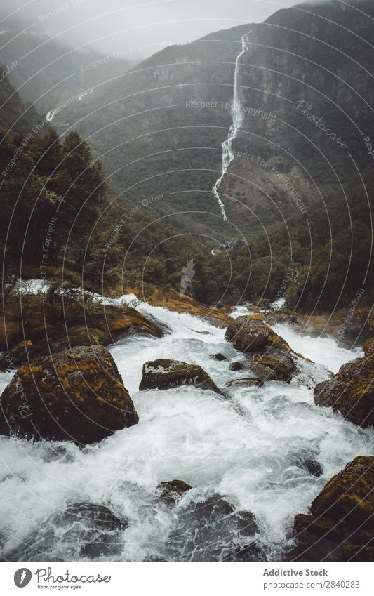 Water stream in mountains River Speed Mountain Splashing Stream cascade Movement Forest coniferous Environment Rock Haze Fresh Extreme Adventure Wilderness
