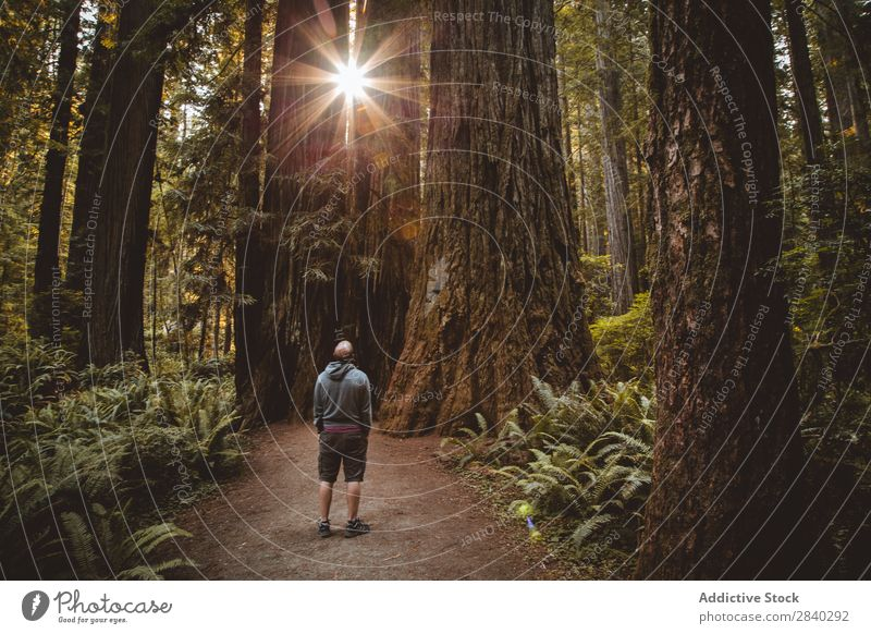 Man among huge trees and sunlight Forest Magic Landscape Observe Meditative Nature Rural Old Sunbeam Adventure Stand Natural Relaxation Easygoing Traveling