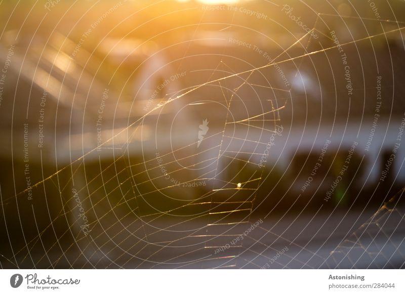 Nature City Sun Animal Yellow Street Warmth Autumn Orange Gold Esthetic Thin Net Sewing thread Fine Spider