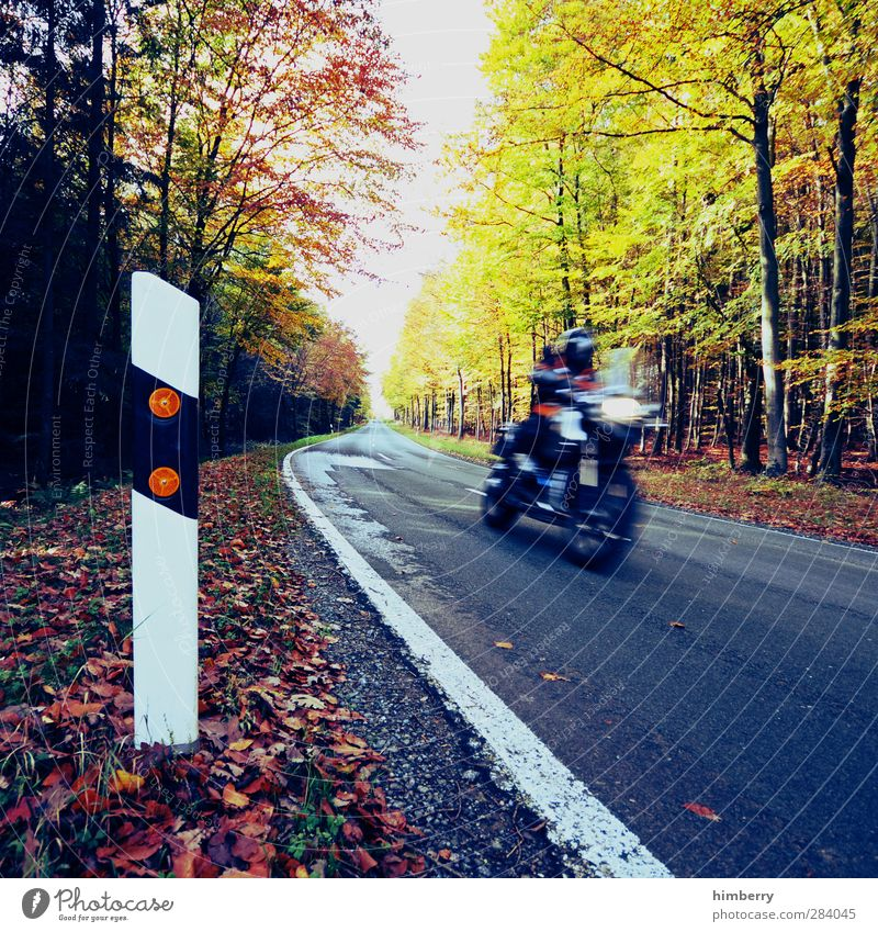 Human being Summer Leaf Forest Street Autumn Freedom Style Bicycle Leisure and hobbies Energy industry Transport Tourism Future Speed Trip