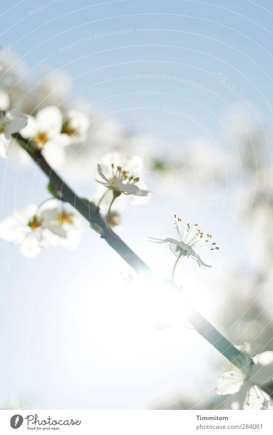 Sky Nature Blue White Plant Sun Environment Emotions Blossom Bright Natural Esthetic Blossoming Spring fever