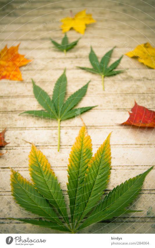 Jamaican autumn Table Autumn Hemp Leaf Maple leaf Cannabis leaf Illuminate Exceptional Positive Rebellious Beautiful Joie de vivre (Vitality) Change Decoration