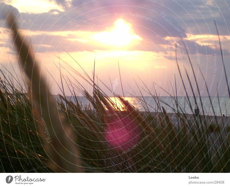 sommmer sunshine sunshine Sunset Netherlands Beach Ocean Lake Beach dune sunflare North Sea banjaard camper country