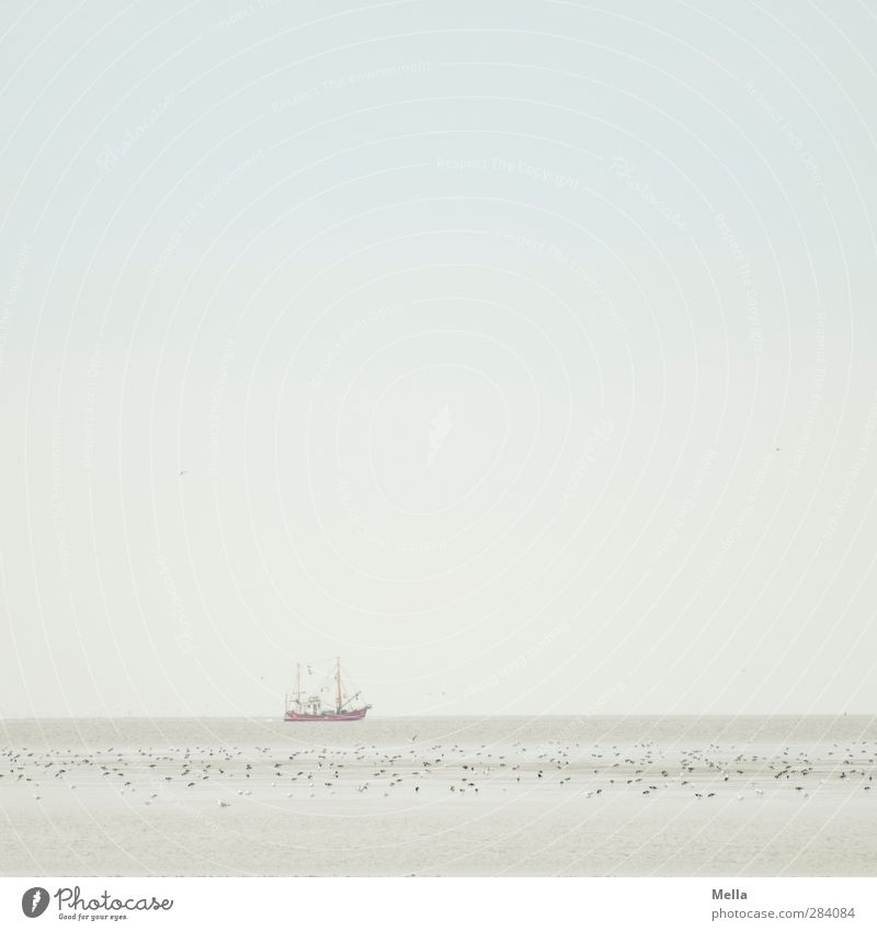 Female   The Sea Environment Nature Landscape Elements Sand Water Sky Coast North Sea Ocean Navigation Fishing boat Bird Flock Driving Swimming & Bathing Stand