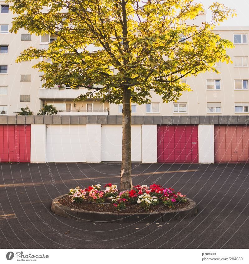 island House (Residential Structure) Garden Environment Beautiful weather Tree Flower Town Downtown Populated High-rise Park Places Parking garage Architecture