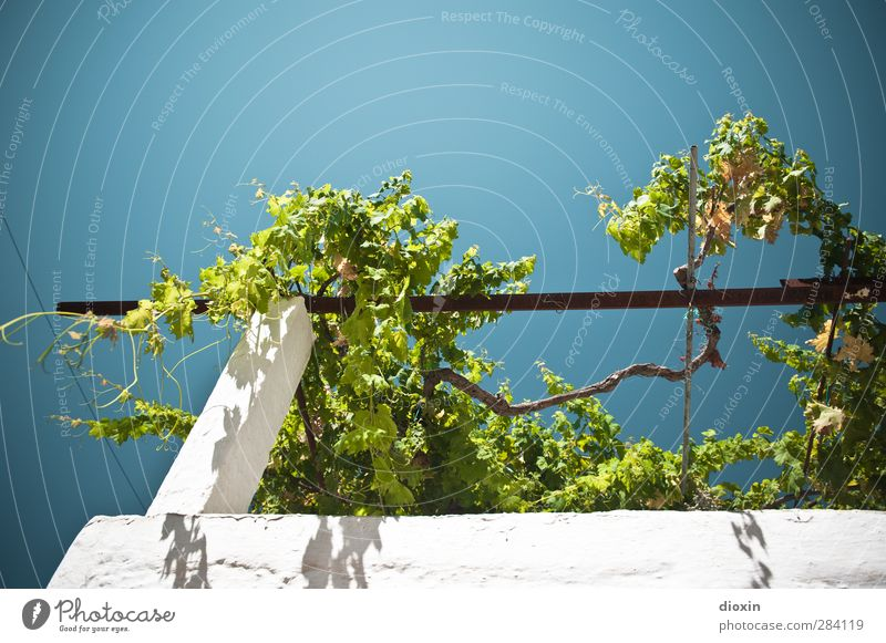 Sky Vacation & Travel Summer Plant Wall (building) Wall (barrier) Weather Climate Growth Island Tourism Beautiful weather Vine Summer vacation Cloudless sky