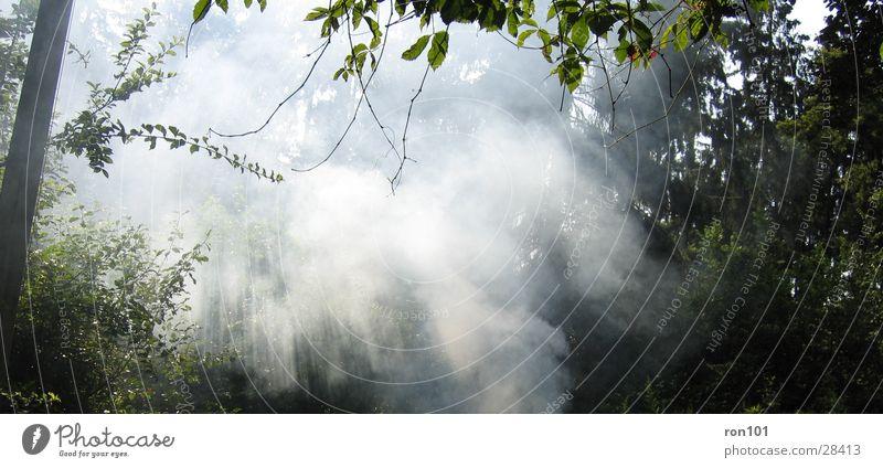 the fog Forest Fog Sunbeam Leaf Green White Tree Lighting Smoke
