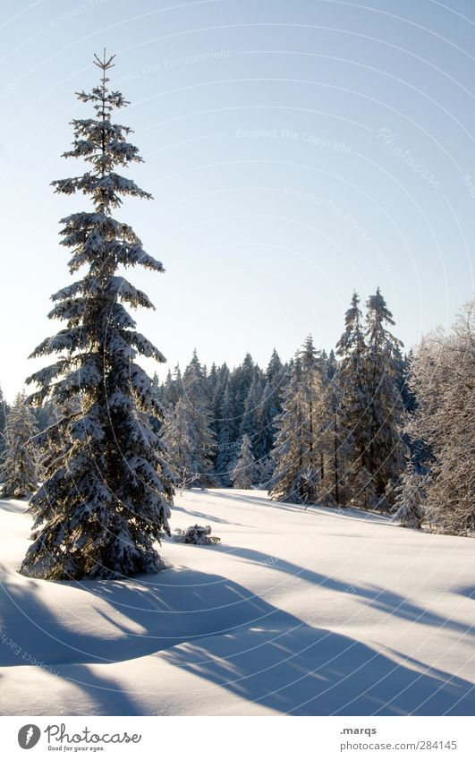 Nature Beautiful Tree Landscape Winter Forest Cold Snow Beautiful weather Elements Cloudless sky Coniferous trees