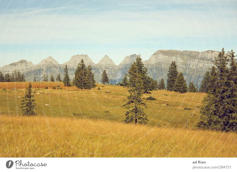 Sky Nature Plant Tree Loneliness Calm Landscape Forest Far-off places Mountain Autumn Grass Freedom Horizon Field Hiking