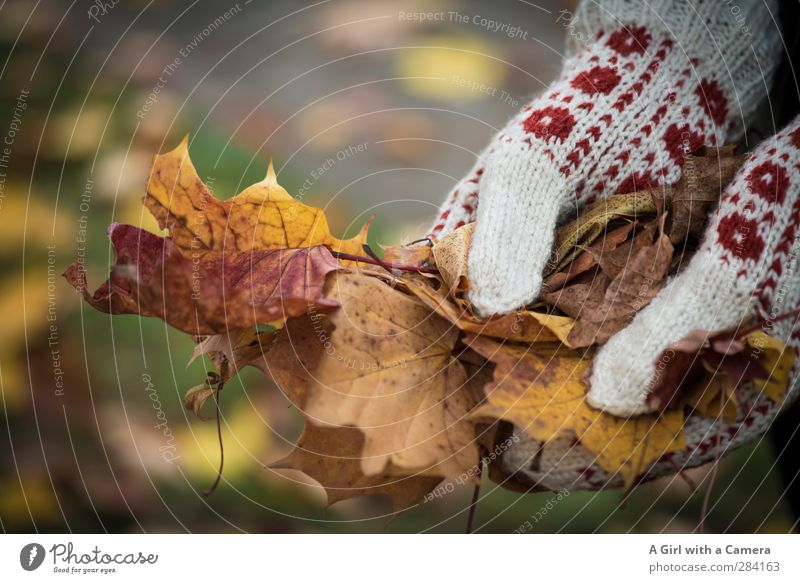 I'm leaving Autumn Leaf Garden Park Multicoloured Autumn leaves Indian Summer Gloves Stop Subdued colour Exterior shot Detail Copy Space top Day