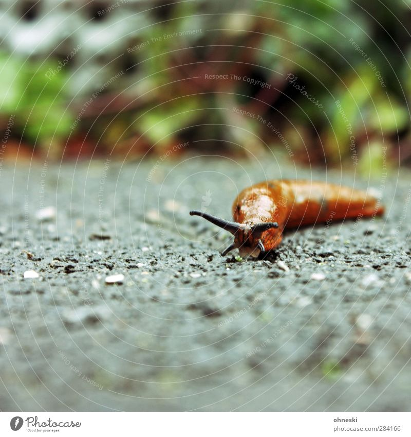 Always take it easy Nature Animal Snail Feeler 1 Serene Slowly Patient Colour photo Exterior shot Copy Space left Copy Space top Copy Space bottom