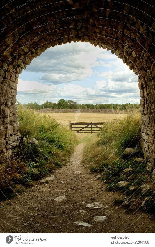 The way Environment Nature Landscape Animal Elements Earth Air Sky Clouds Storm clouds Summer Wind Grass Bushes Meadow Field Village Deserted Ruin Tunnel