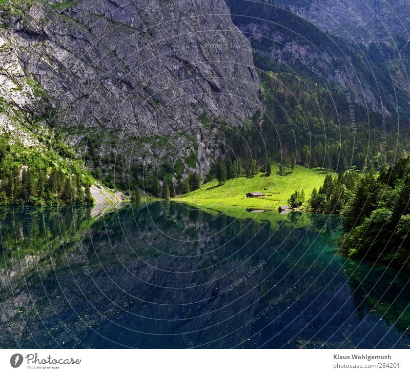 Nature Blue Water Tree Relaxation Landscape Calm Far-off places Forest Mountain Environment Yellow Spring Grass Gray Lake