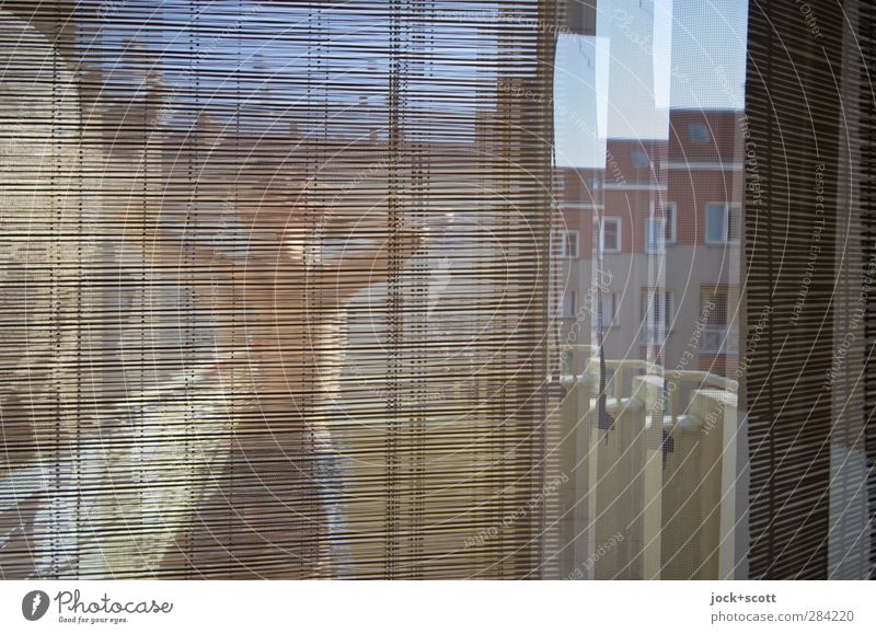 stock up on some sunshine Lifestyle Joy Living or residing Venetian blinds Balcony Human being Masculine 18 - 30 years Youth (Young adults) Adults