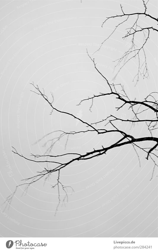 ...look for a sheet or also 2 Environment Nature Plant Sky Clouds Tree Wild plant Park Wood Cold Gray Black Twig Branch Black & white photo Exterior shot Day