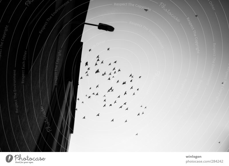 Nature Old City White Black Dark Emotions Above Building Car Window Bird Dream Moody Flying Fear Wild