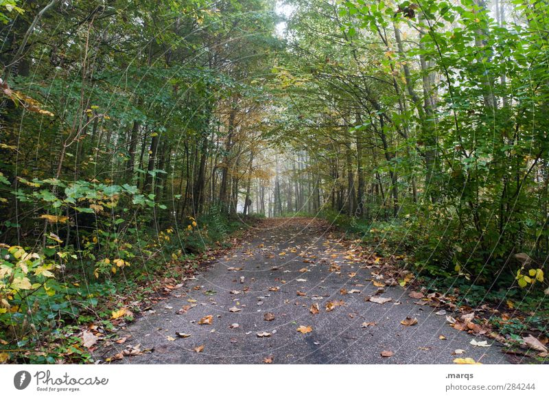 a way out Trip Environment Nature Autumn Climate Fog Plant Tree Leaf Forest Street Lanes & trails Simple Natural Perspective Colour photo Exterior shot Deserted
