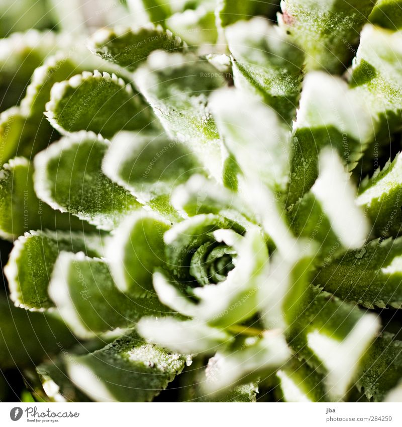 plant Environment Nature Plant Spring Flower Foliage plant Wild plant Old Growth Round Green Middle Many Deep Symmetry Shadow Concealed Colour photo