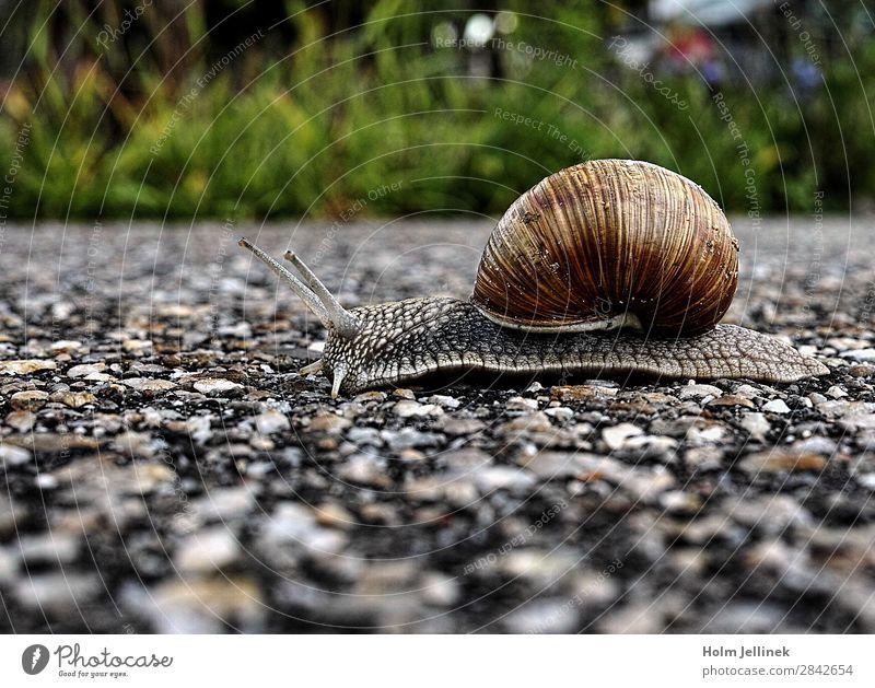 asphalt worm Animal Snail Cool (slang) Esthetic Movement Nature Macro (Extreme close-up) Blur Structures and shapes Contrast Colour photo Multicoloured
