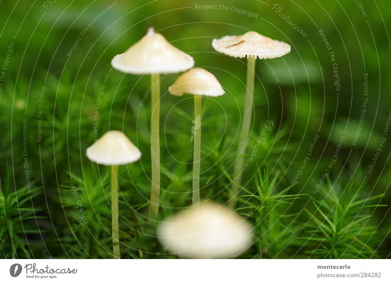 one thing is certain... Environment Nature Plant Autumn Moss Foliage plant Wild plant Mushroom Forest Thin Authentic Simple Glittering Small Natural Slimy Green