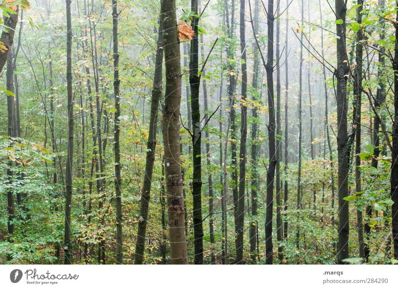 Nature Tree Forest Environment Cold Autumn Air Climate Fog Wet Tree trunk Climate change Habitat Deciduous forest