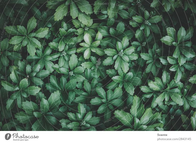 Top view of green leaves Nature Plant Leaf Foliage plant Wild plant Garden Esthetic Green Background picture Neutral Background Colour photo Copy Space left