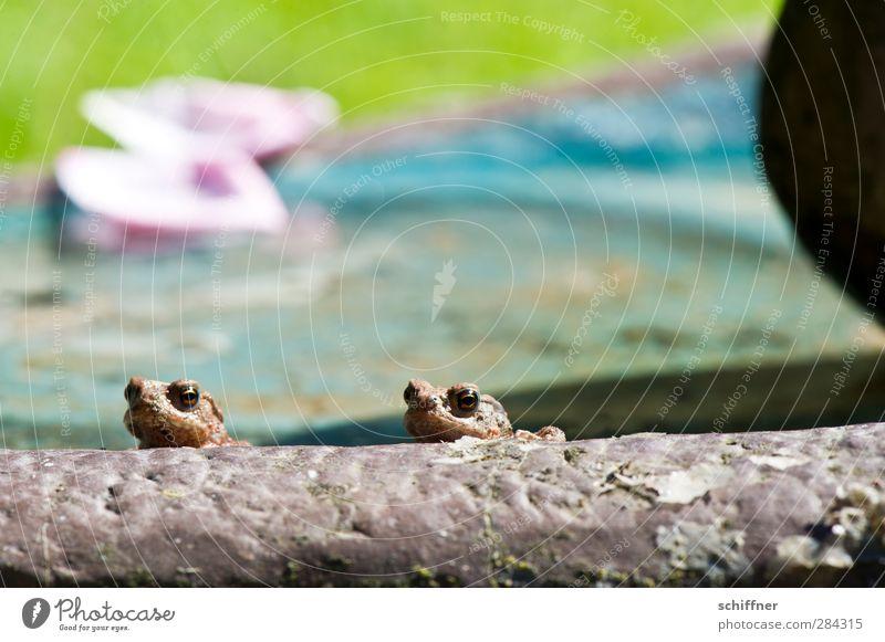 peripheral phenomenon Animal Wild animal Frog 2 Pair of animals Baby animal Small Relaxation Looking Corner Marginal group Marginal phenomenon Fringe zone Edge