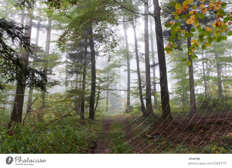 walk in the woods Hiking Environment Nature Landscape Elements Autumn Climate Climate change Weather Fog Plant Tree Deciduous forest Forest Lanes & trails Fresh