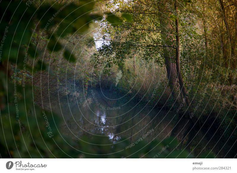 Nature Tree Landscape Forest Environment Dark Bushes Brook