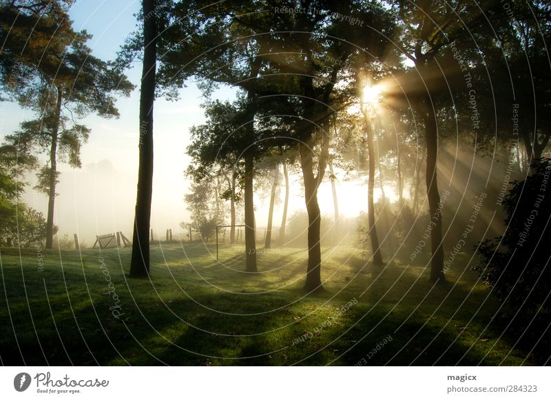 Sunrise Autumn fog in the forest Environment Nature Landscape Sky Sunset Sunlight Beautiful weather Fog Tree Grass Leaf Garden Meadow Forest Village Outskirts