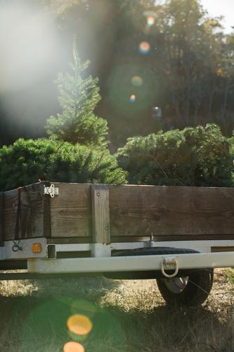 Trailer with fir trees Tree Forest Car Nature Pine Park Environment Christmas & Advent Preparation Natural Spruce Beautiful Green Evergreen Sunbeam Wood Weather