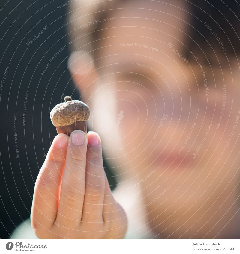 Hands holding big acorn Human being Acorn Nature Autumn Seasons Forest oak Beautiful Garden Green Nut Seed Natural Bright Multicoloured Holiday season Wood