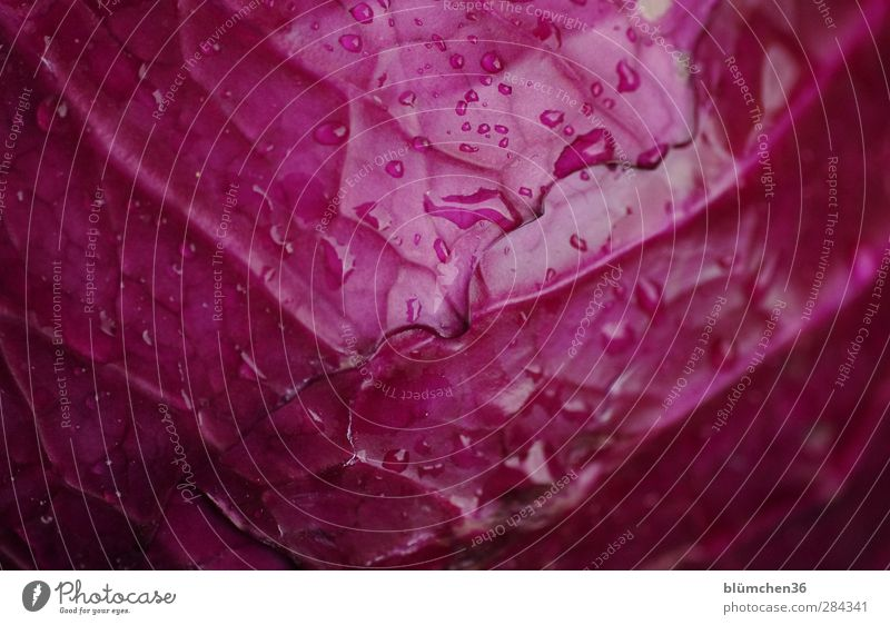 There's red cabbage today. Food Vegetable Red cabbage Red cabbage leaf Cabbage Nutrition Vegetarian diet Plant Agricultural crop Garden Eating Growth Fresh