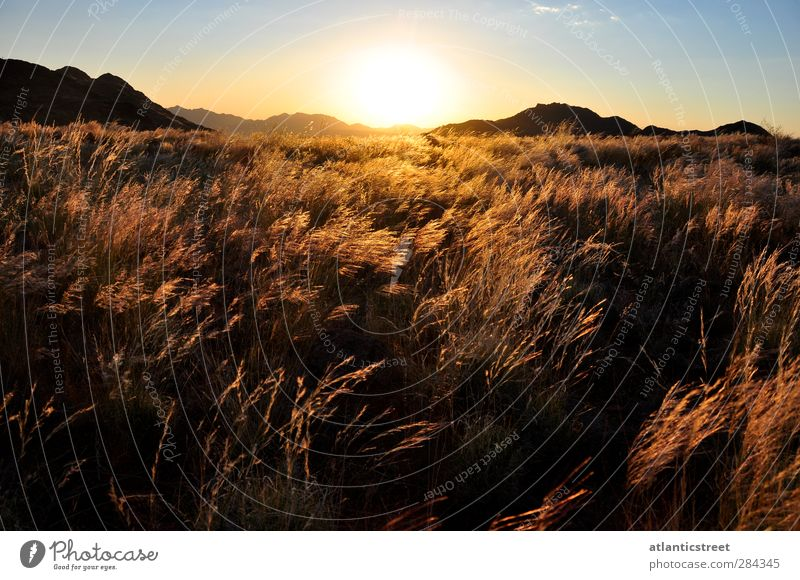 Sunset in the Namib Adventure Far-off places Freedom Safari Expedition Nature Landscape Sunrise Sunlight Beautiful weather Grass Desert Grass Plain Namibia