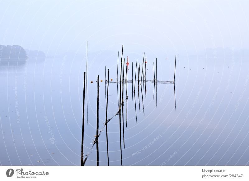 Sky Nature Water Plant Tree Calm Landscape Coast Wood Lake Style Fog Lakeside Agriculture Fishery Workplace