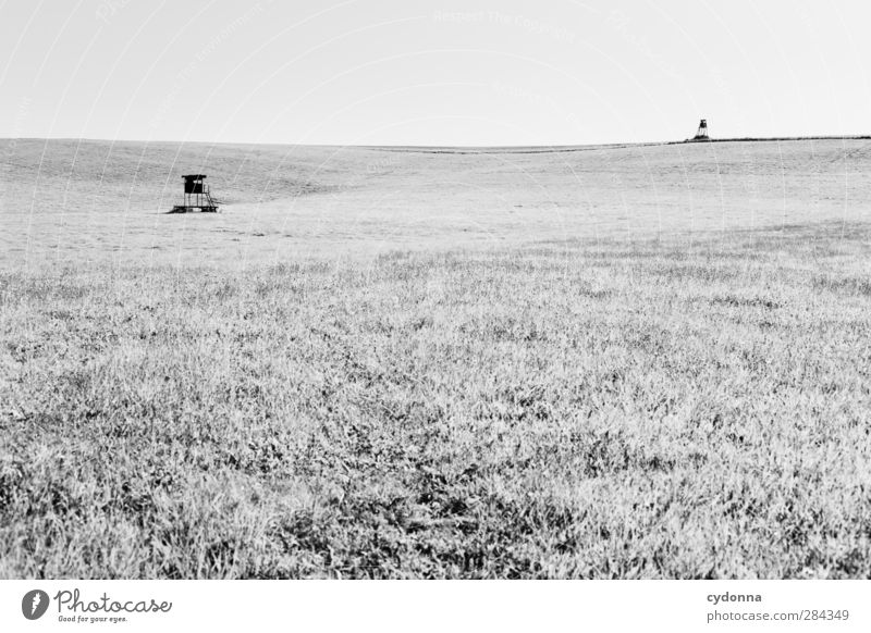 hunting duel Environment Nature Landscape Cloudless sky Summer Meadow Field Esthetic Relationship Loneliness Discover Expectation Freedom Threat Horizon