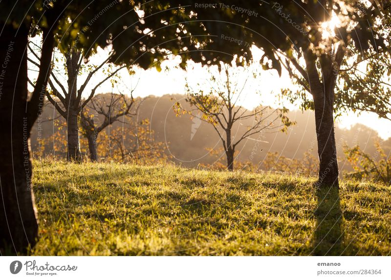 autumn evening Environment Nature Landscape Plant Sun Autumn Climate Weather Tree Grass Park Meadow Field Forest Hill Mountain Warmth Yellow Green Black Forest