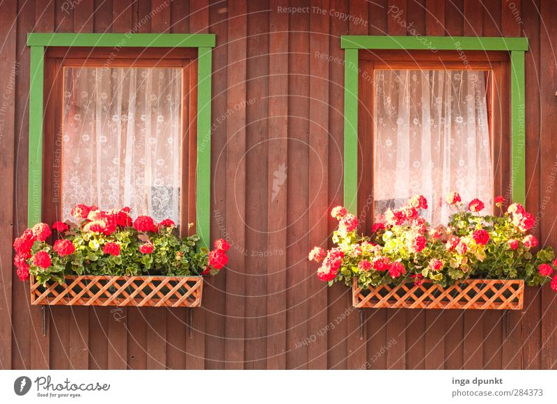 Vacation & Travel Beautiful House (Residential Structure) Window Germany Travel photography Tourism Idyll Village Window board Harz Vacation home Vacation photo