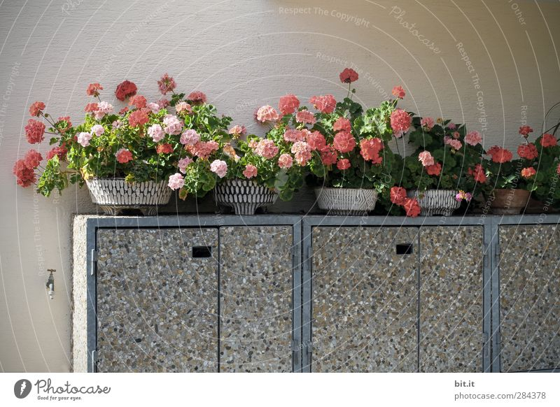 Plant Flower Red Wall (building) Blossom Wall (barrier) Gray Contentment Growth Decoration Blossoming Concrete Car door Kitsch Trash Containers and vessels