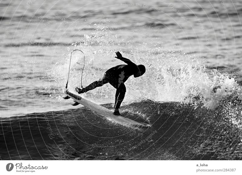 ocean love Lifestyle Leisure and hobbies Sports Aquatics Surfing Human being Masculine Man Adults 1 Nature Elements Water Summer Waves Coast Ocean Movement