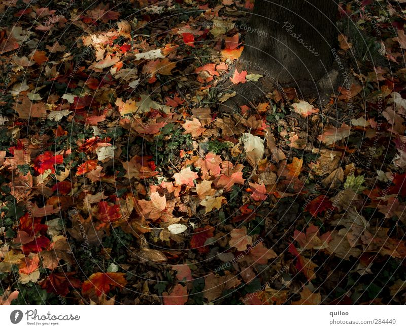 autumn mood Nature Earth Autumn Leaf Meadow Forest Dark Brown Multicoloured Red Moody Decline Transience Change To fall Lie Colour photo Exterior shot Shadow