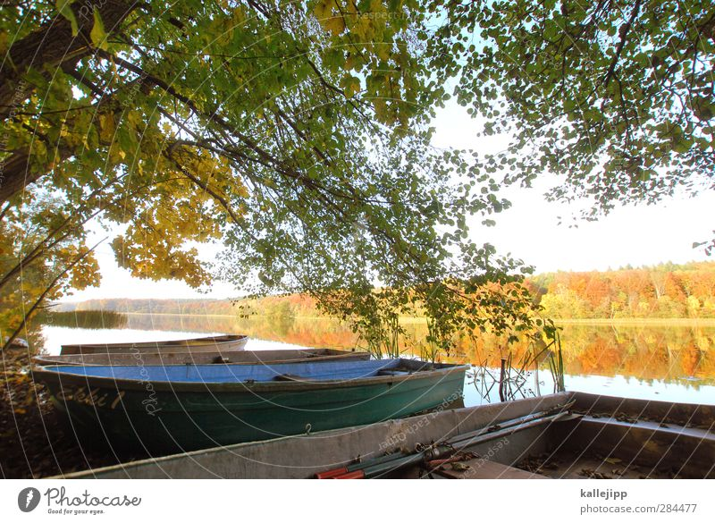 Nature Water Plant Tree Animal Leaf Landscape Yellow Environment Autumn Lake Watercraft Gold Lakeside Harbour Rowboat