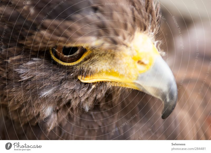 Nature Animal Environment Eyes Freedom Bird Natural Wild animal Feather Near Animal face Hunting Beak