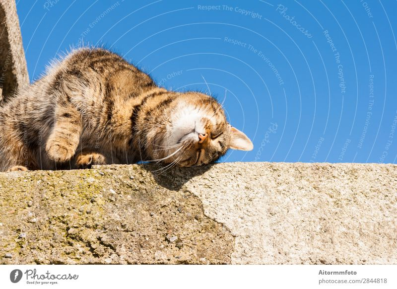 Beautiful cat Cat Sky Nature Blue White Clouds Animal Face Funny Stone Gray Rock Friendship Sit Stand